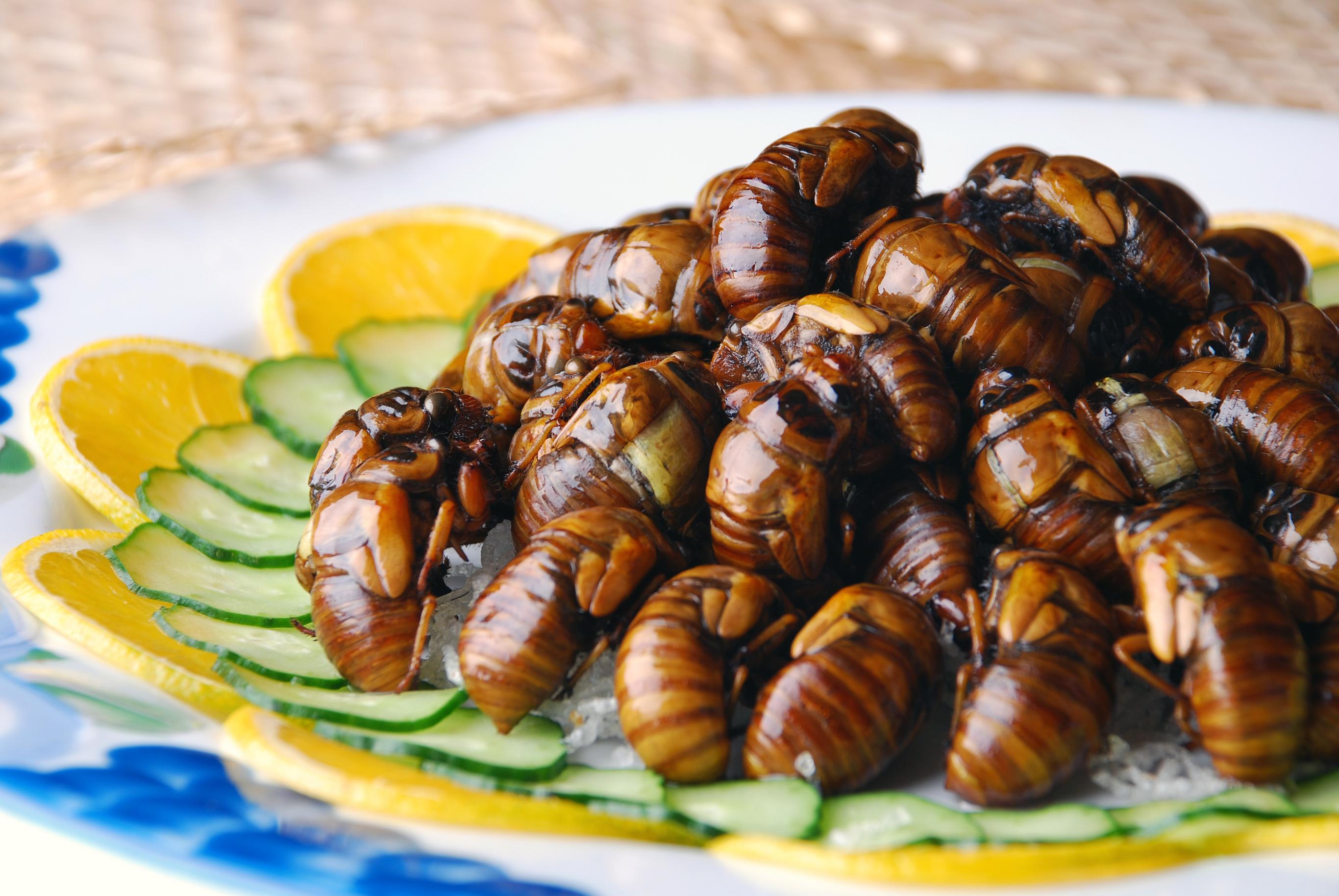 1110_Bugs_Cicada