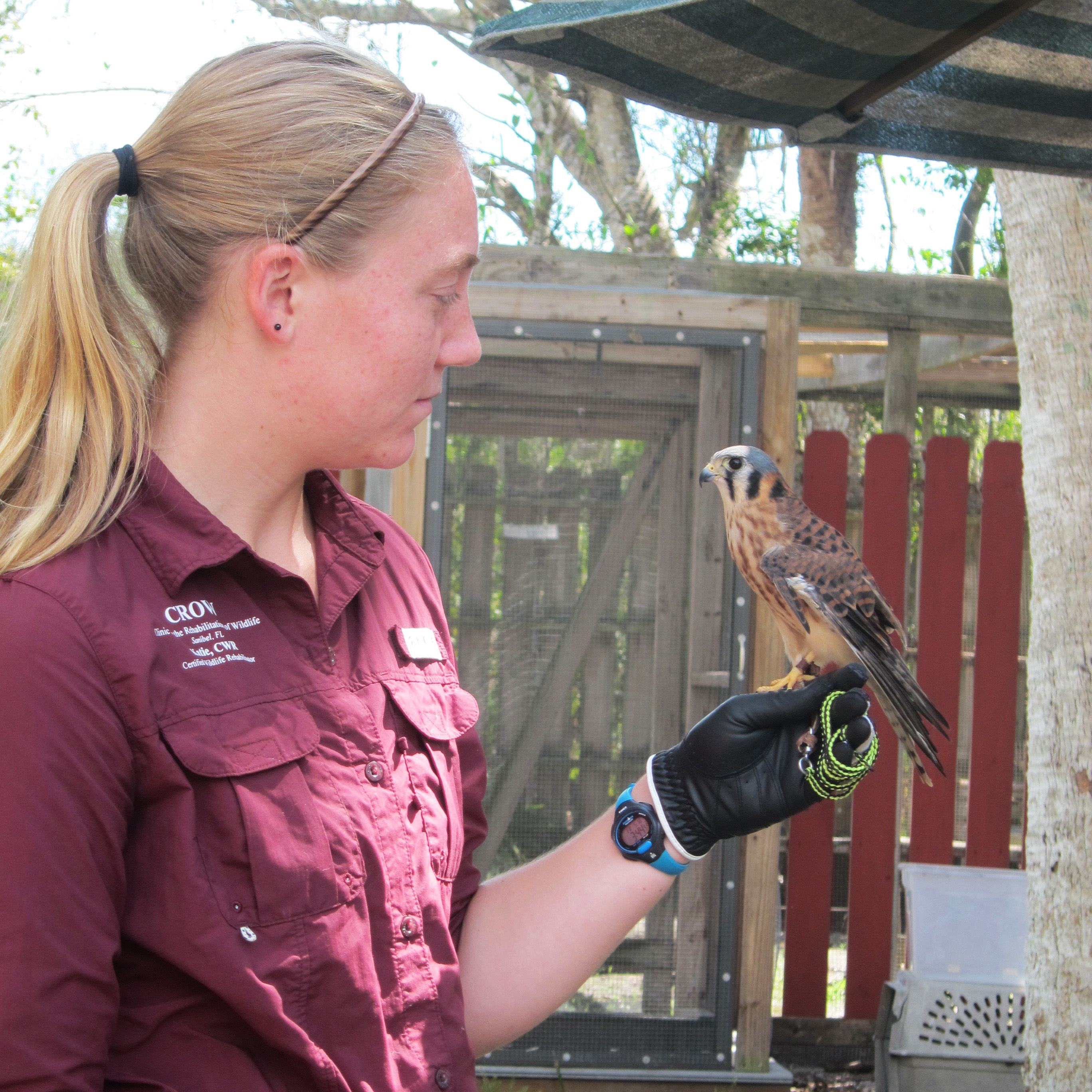 4-GIRL-HOLDING-LOLA-Caption-CROW-wildlife-rehabilitator-Katie-Mueller-holds-Lola-the-American-Kestrel-one-of-the-clinics-ambassador-animals.-Lola-has-an-irreparable-broken-wing-so-she-lives-at-the-clinic-rather-than-in-the-wild.-jpg.jpg?mtime=20180609213023#asset:102091