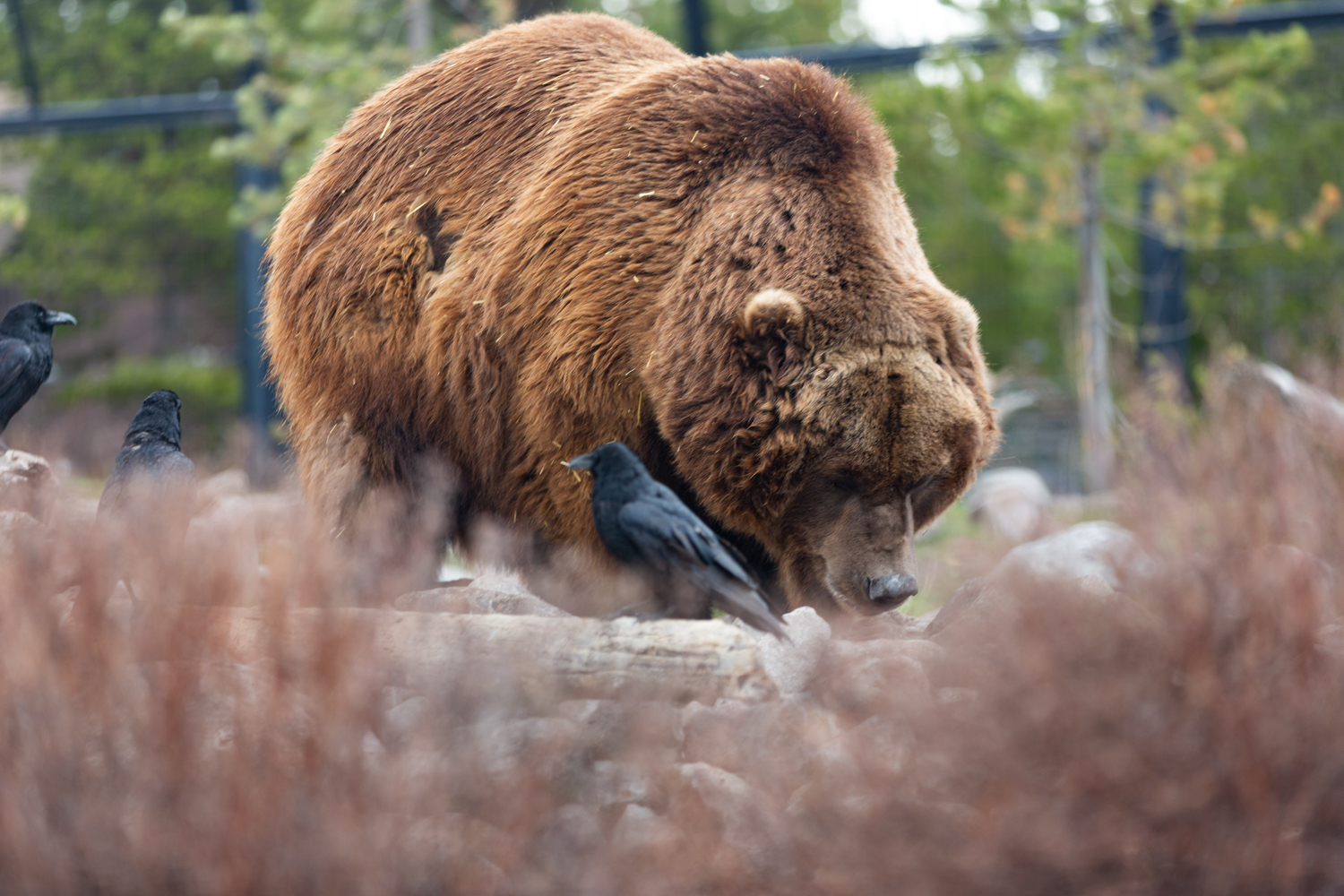 GrizzlyDiscovery.jpg?mtime=20190726081319#asset:106486
