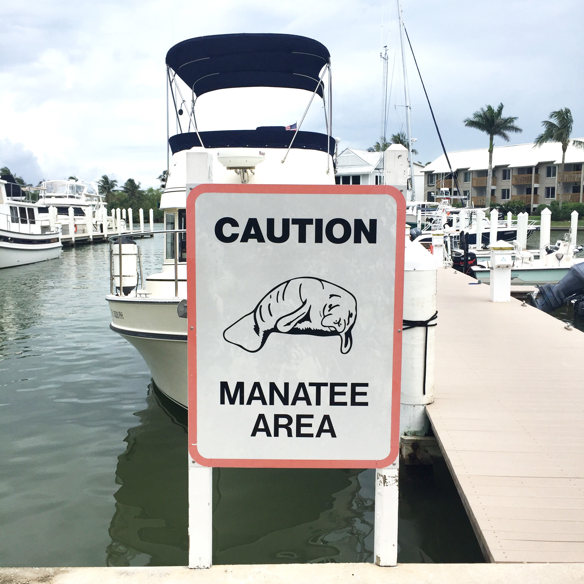 1-OPTIONAL-MANATEE-SIGN-PHOTO-HERE-Caption-Manatee-sightings-are-common-at-South-Seas-Island-Resorts-marina.jpg?mtime=20180609213115#asset:102094
