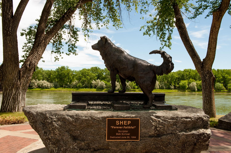 Montana-Benton-Sheep-dog-statue.JPG?mtime=20180424154859#asset:101596