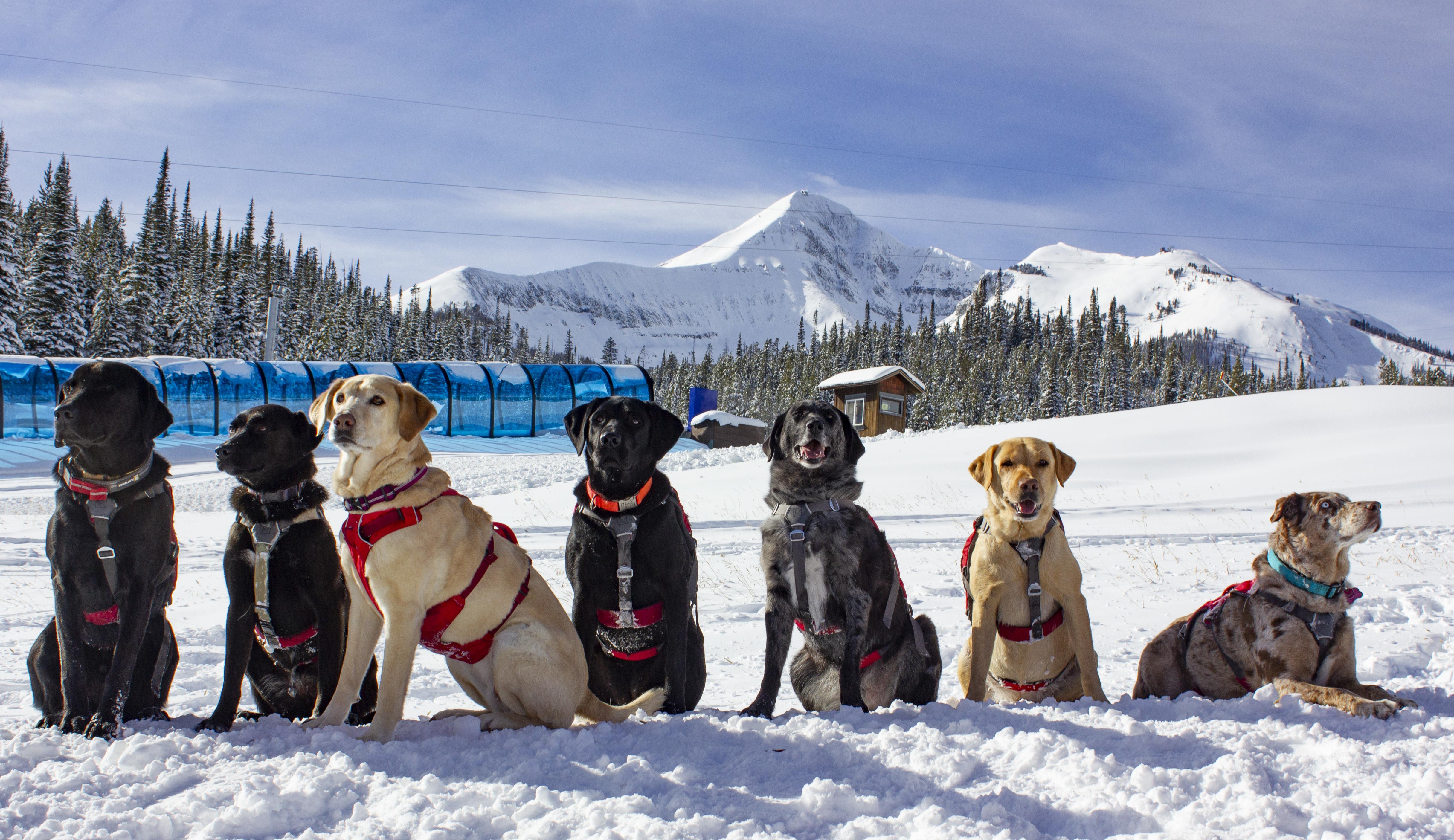 Montana-dog-ski-patrol.jpg?mtime=20181212204941#asset:104051