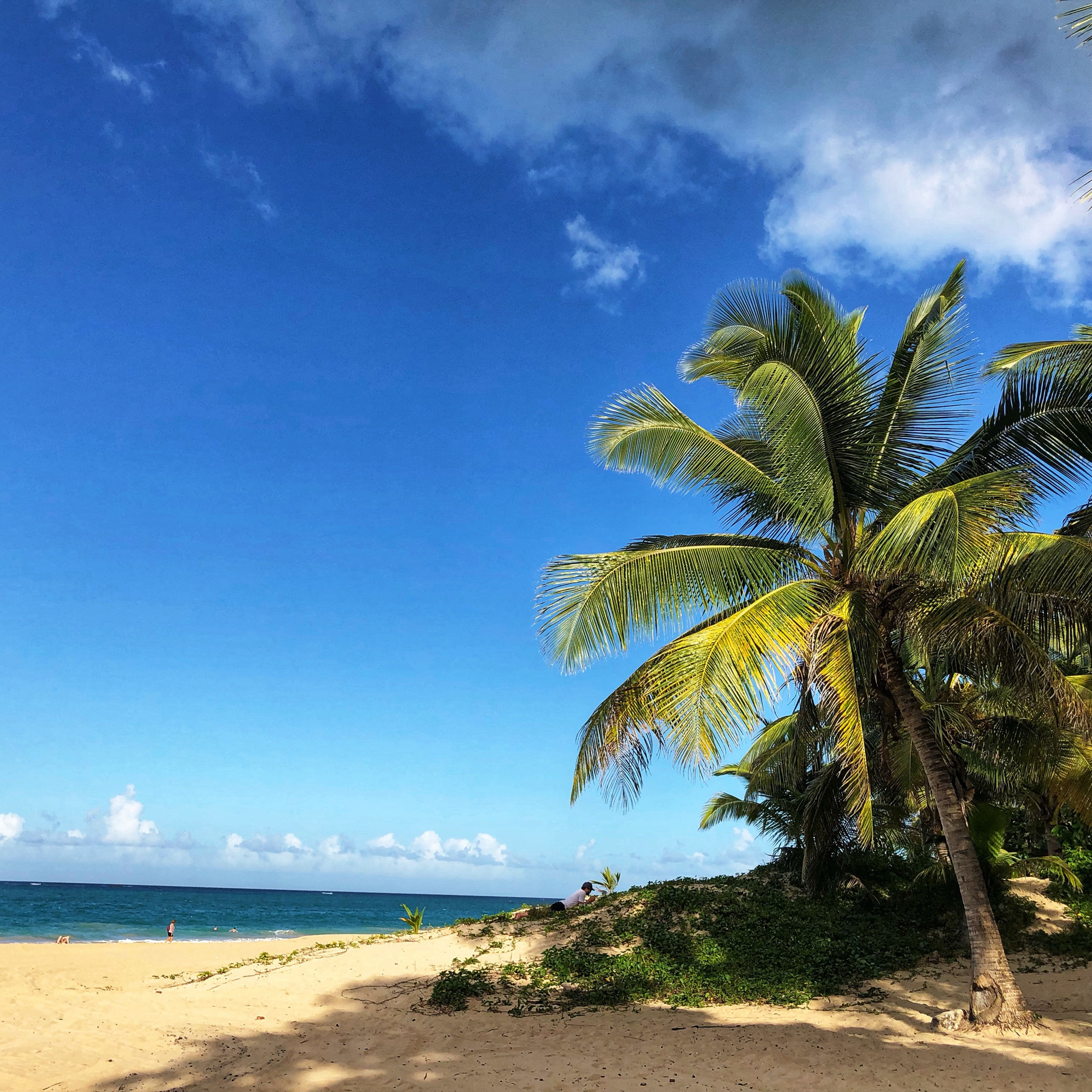 Puerto-Rico-Ocean-Park-beach ▷ Acabo de volver de: San Juan, Puerto Rico