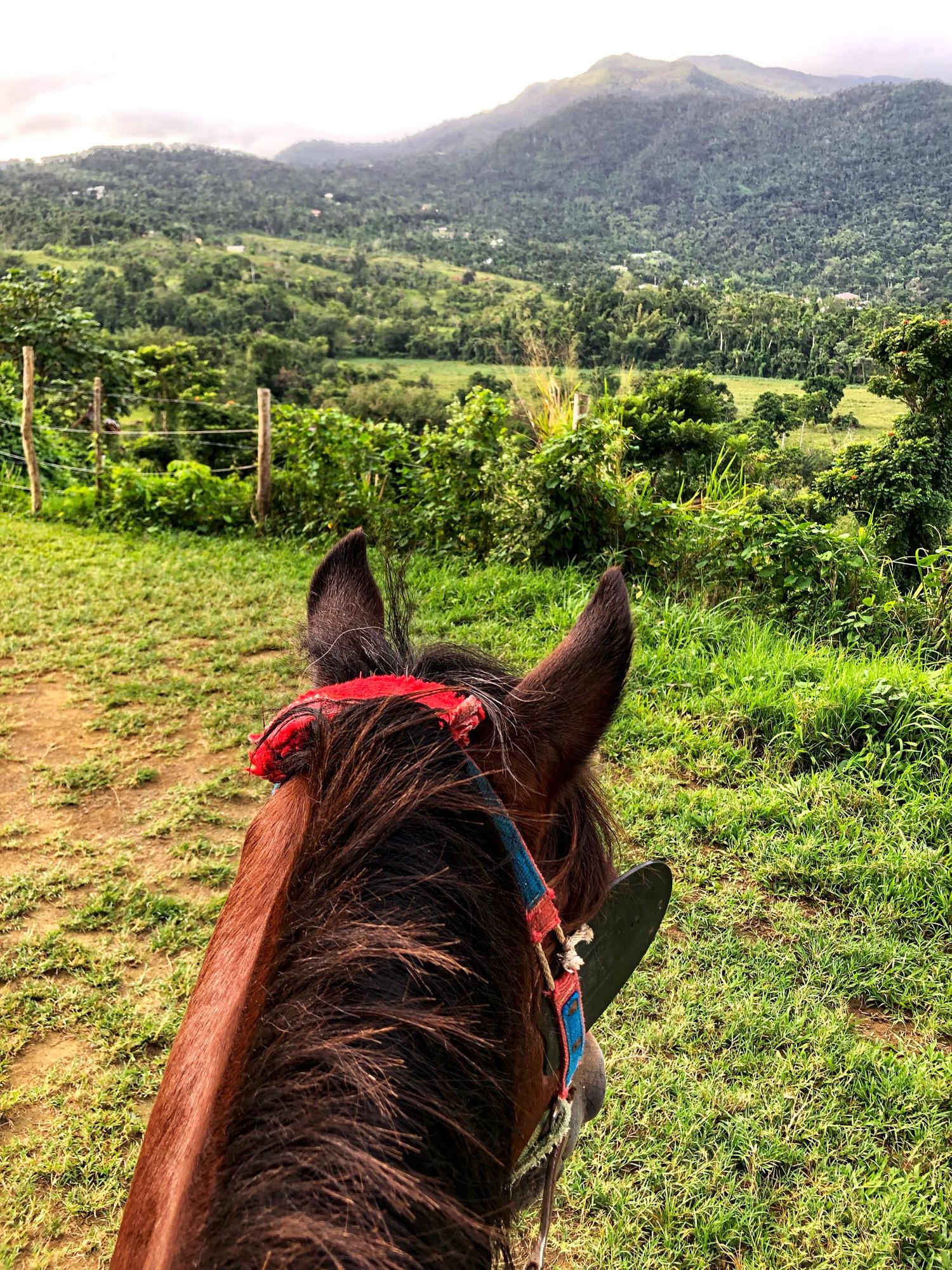 Puerto-Rico-horse-back-riding ▷ Acabo de volver de: San Juan, Puerto Rico