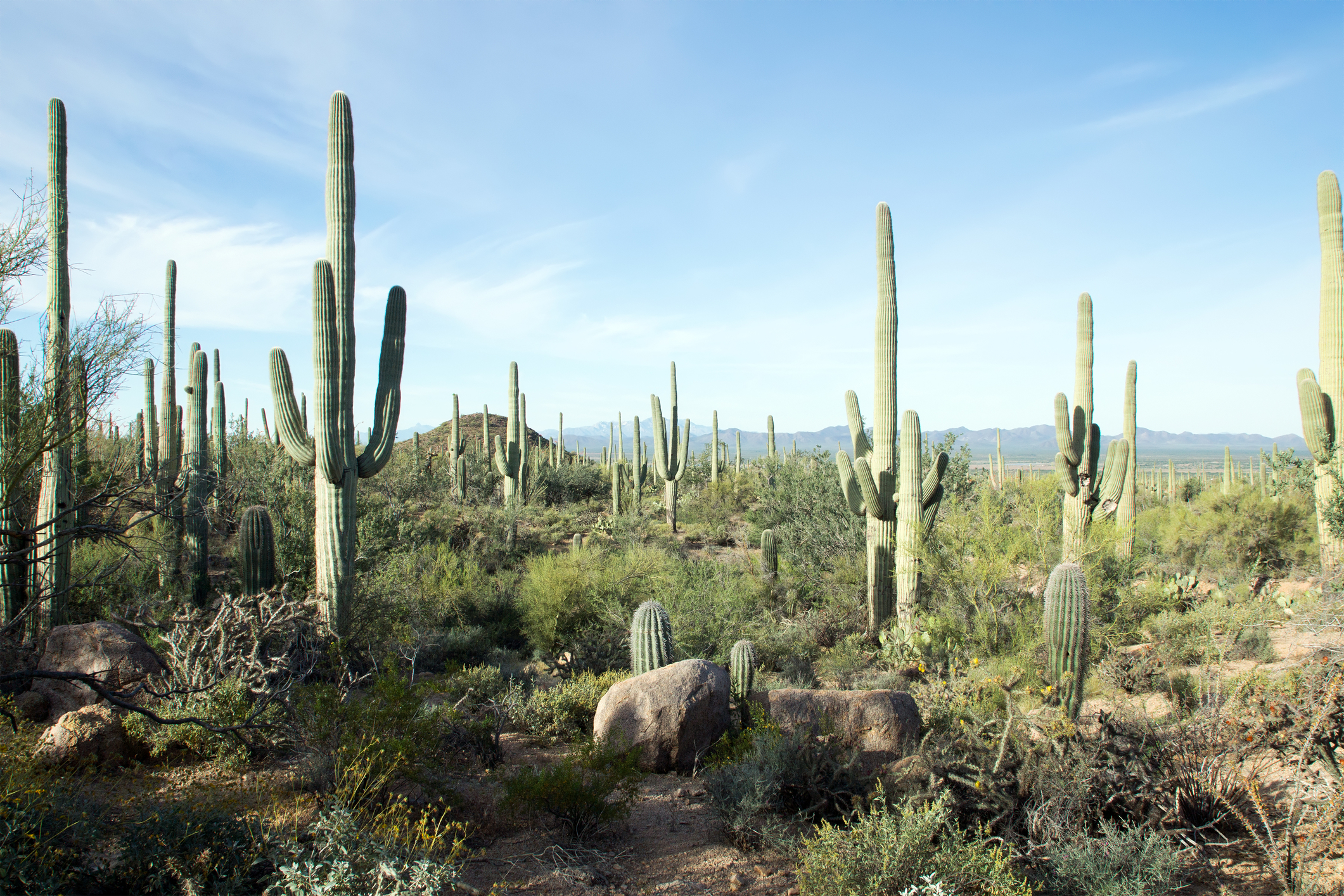 Saguaro-National-Park-Arizona.jpg?mtime=20190405092314#asset:105426