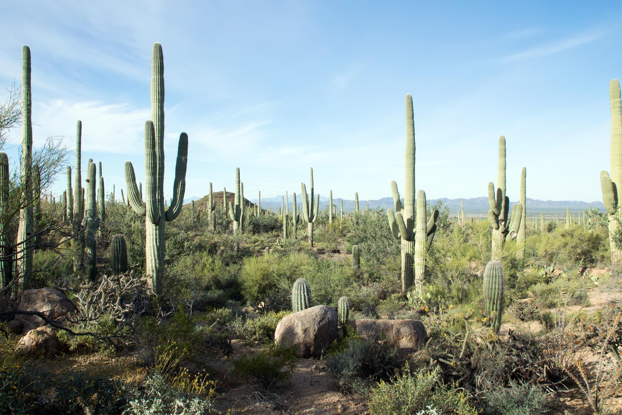 Saguaro-National-Park-Arizona.jpg?mtime=20190405092314#asset:105426