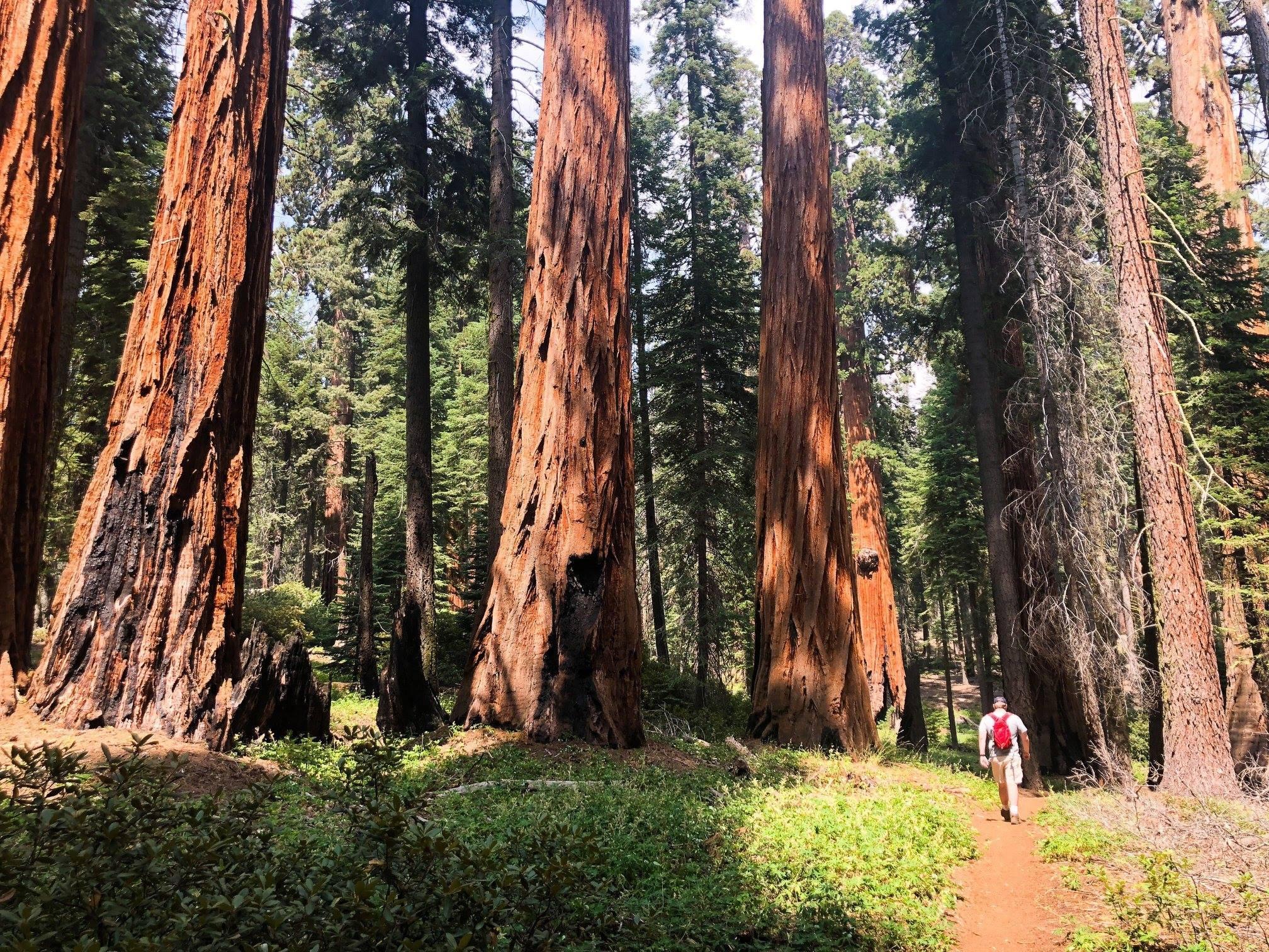 Sequoia National Park Sept 2018