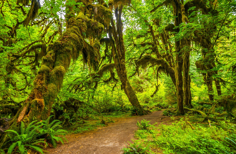 Trail-running-through-a-dense-rainforest.jpg?mtime=20200129110540#asset:107820
