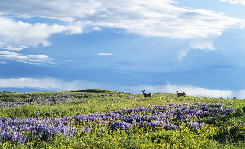 Wyoming-Casper-Field-58624948.JPG?mtime=20180424154905#asset:101601