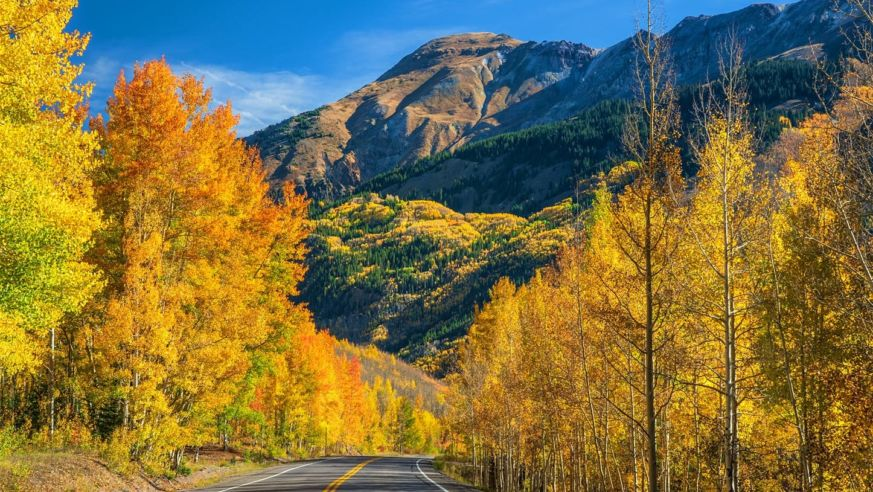 A Road Through Fall Leaves In Colorado
