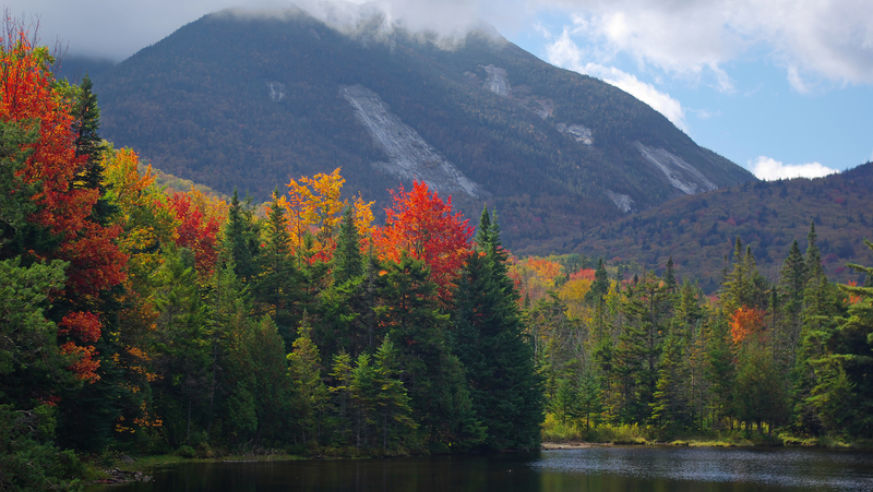 4 Easy & Gorgeous Fall Foliage Trips From NYC