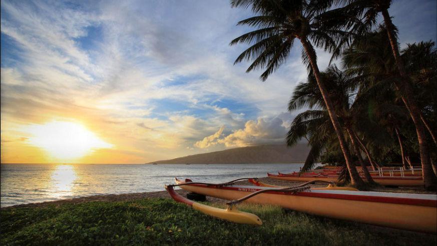 Url Http Wwwhawaiipictureofthedaycom Shy Hawaiian Monk