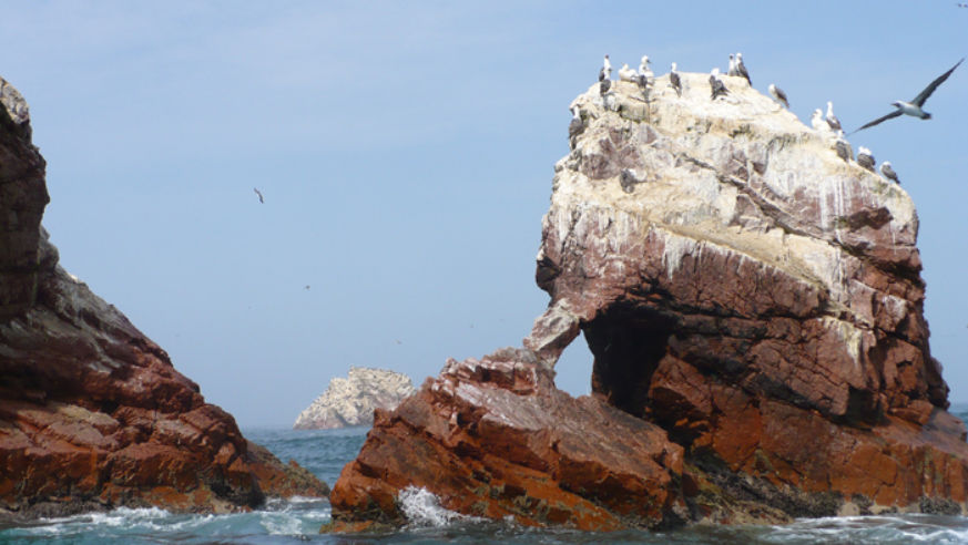 Why Every Nature Lover Should Pay A Visit To Paracas, Peru