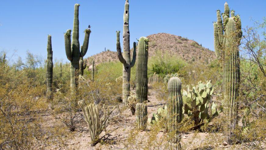 What's Hot in Phoenix