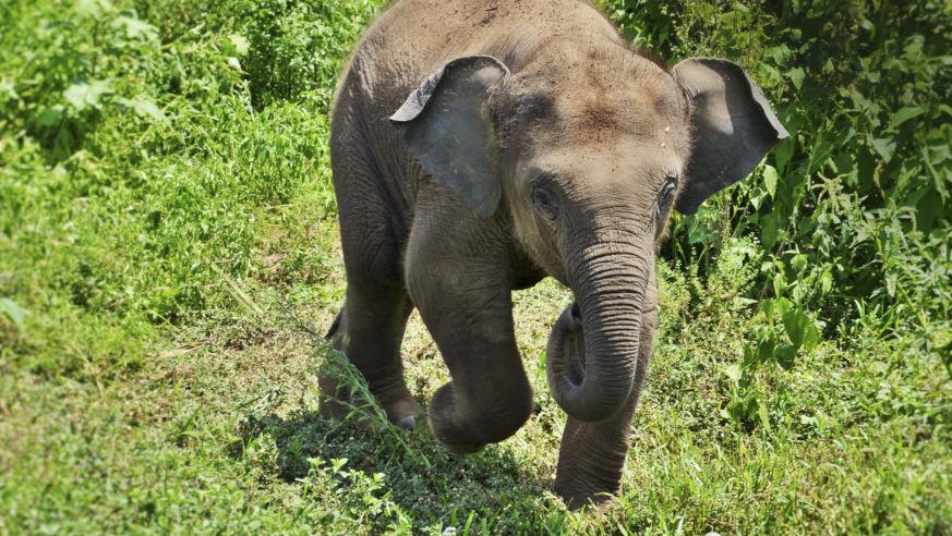 so cute baby elephant takes a bath in thailand we budget travel
