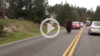 Yellowstone Bison Surprises Motorists