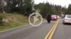 Yellowstone Bison Surprises Motorists
