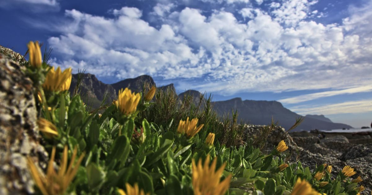 How to do cape town on a budget budget travel for Cape town south africa travel