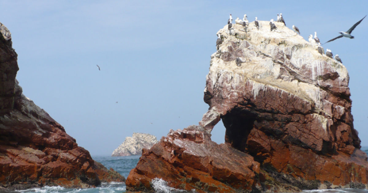 Best Time To Visit Ballestas Islands