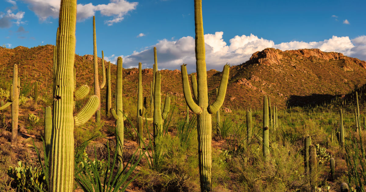 Why Tucson, Arizona, Is Your Next Great Outdoor Adventure | Budget Travel