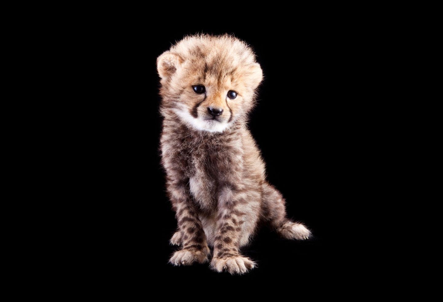 Photos 36 Adorable Zoo Babies Born In 2011 Budget Travel