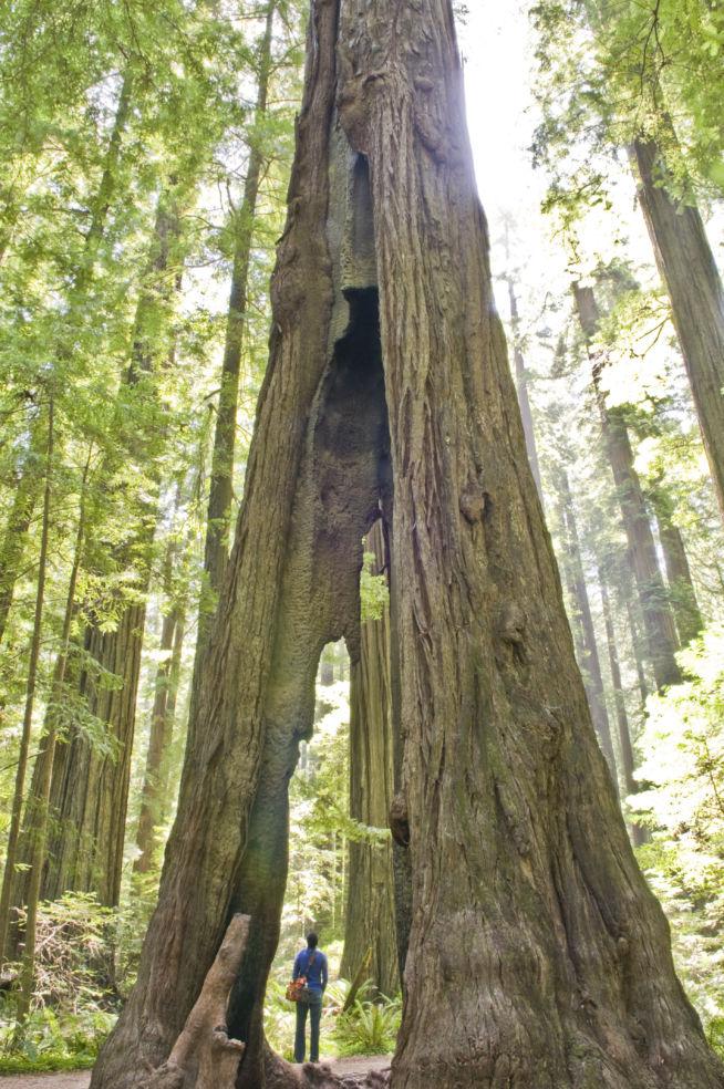 Founders' Grove in California