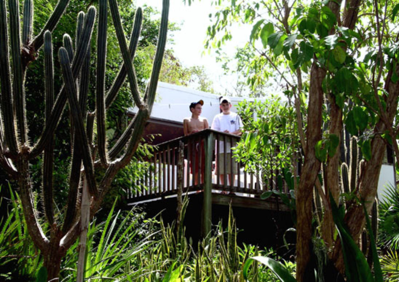 Maho Bay Camps are secluded among plants and trees.