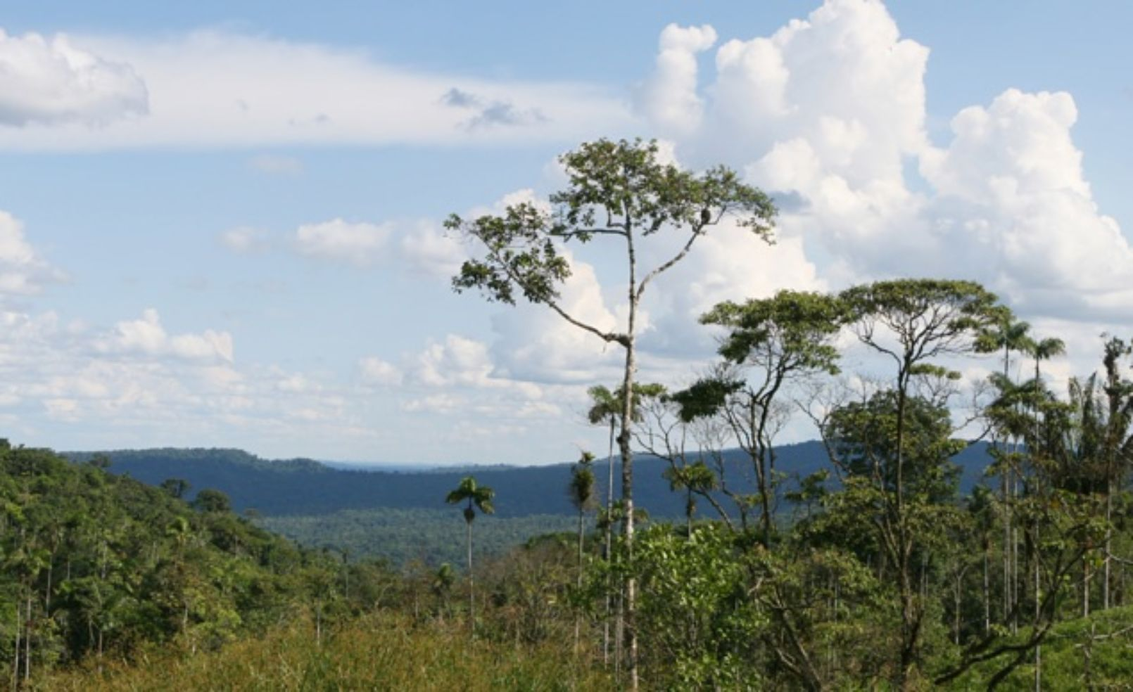treetops in the amazon