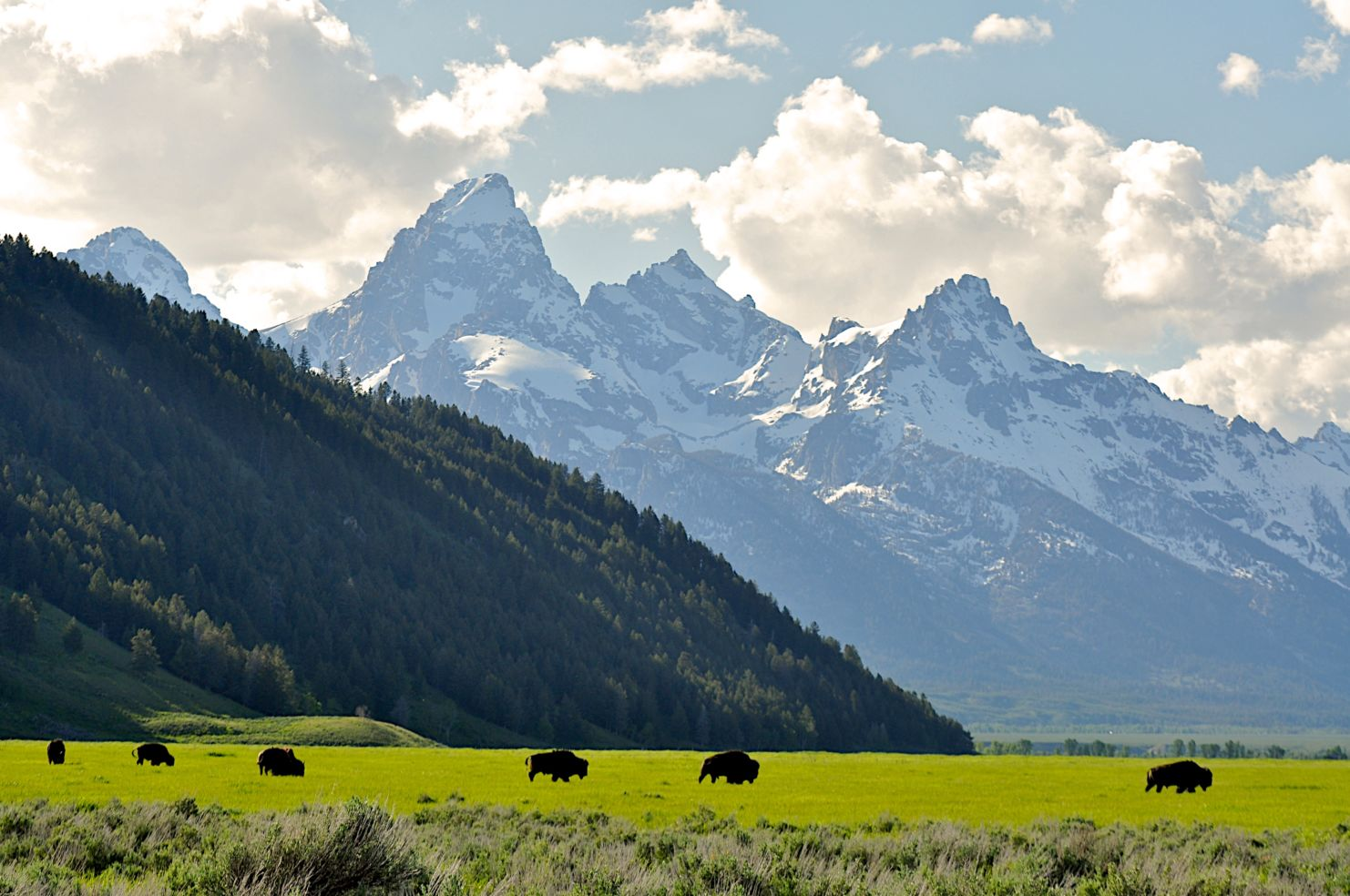 Ecotour Adventures, Grand Teton National Park, Jackson Hole, Wyoming, bisons