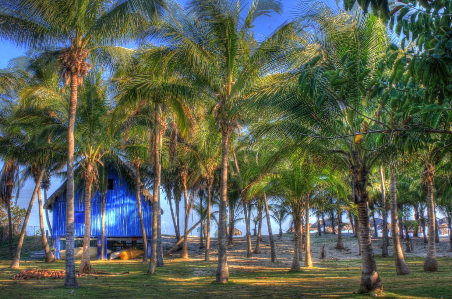 Boat shed and Palm trees on the beach in cuba