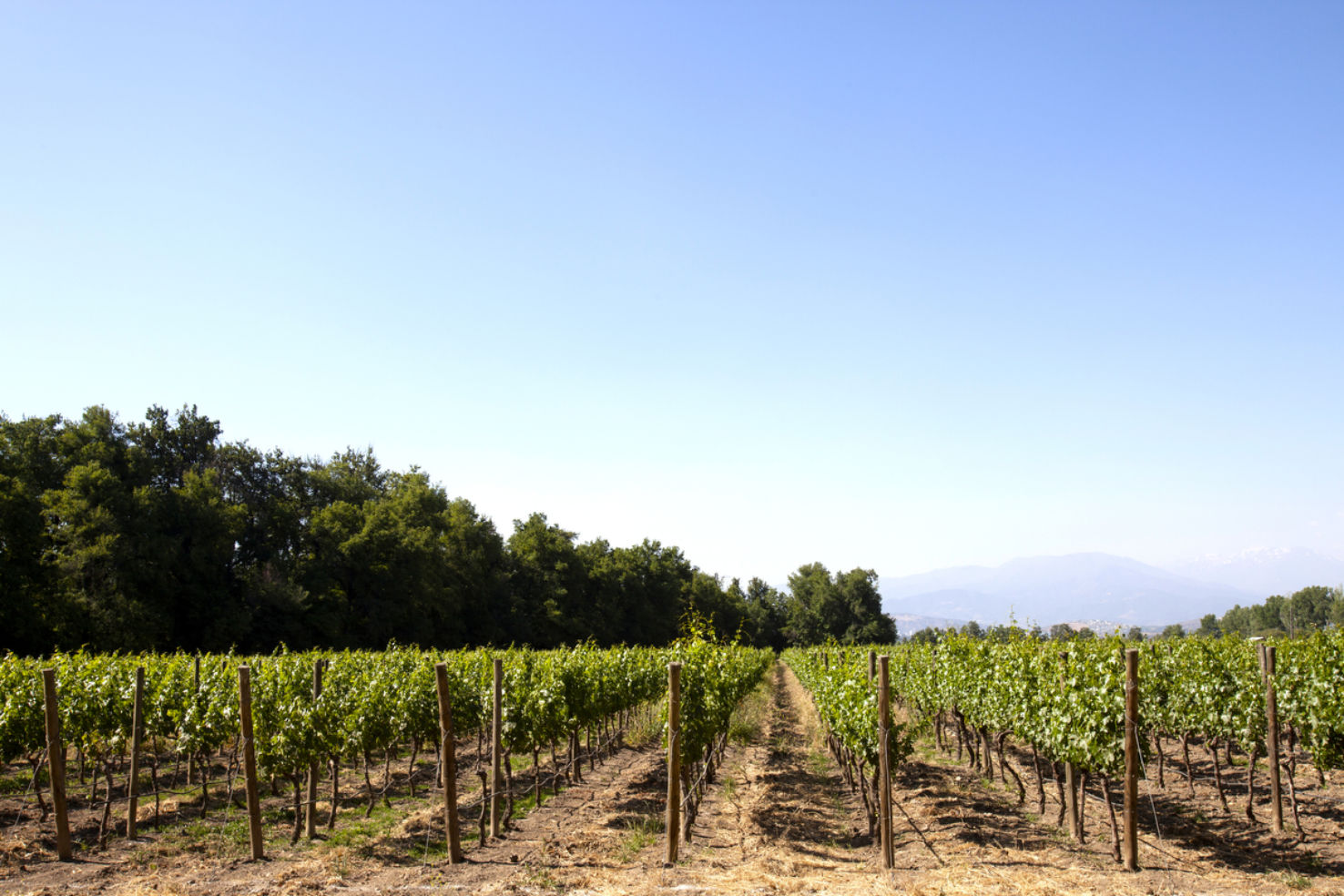 Maipo valley vineyards