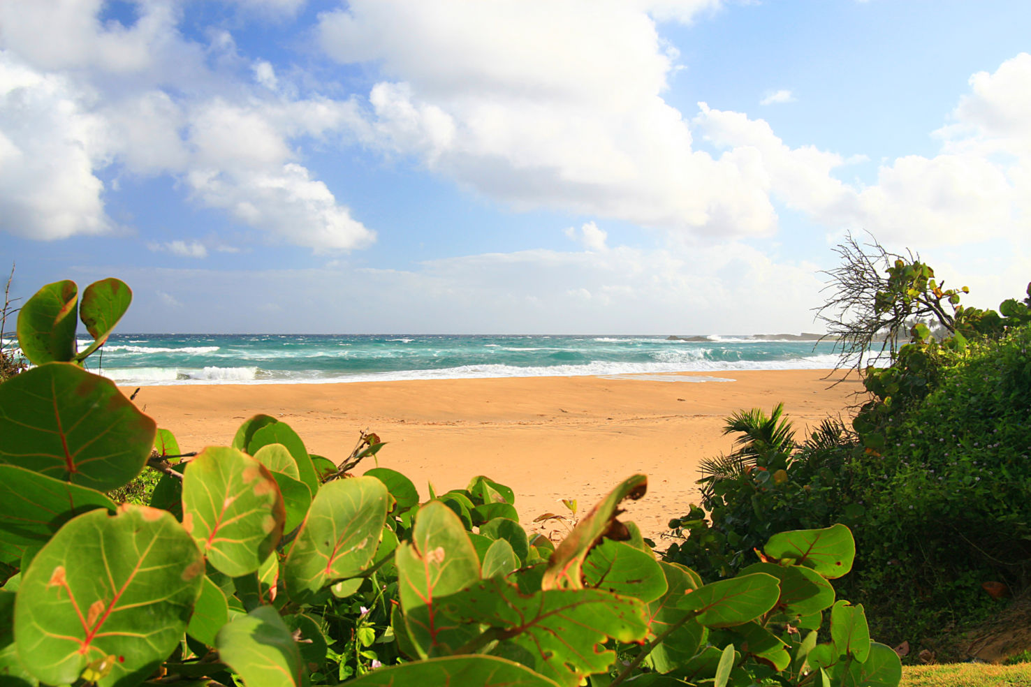 A beautiful scene of a secluded tropical beach in Isabela At the island of Puerto Rico