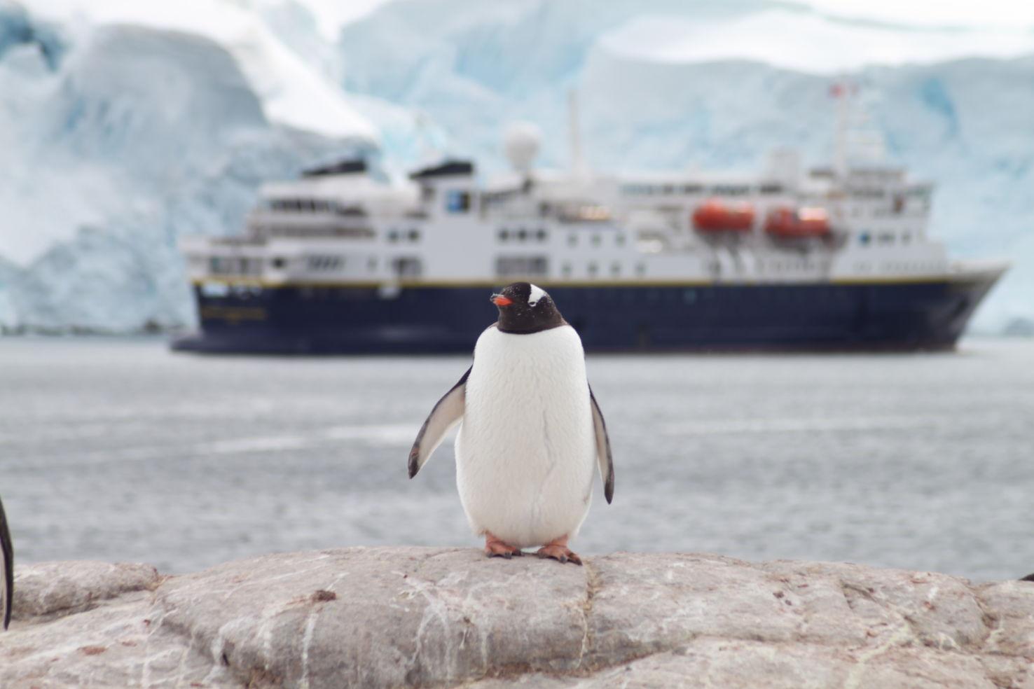 ExitInt_Antarctica_Penguin