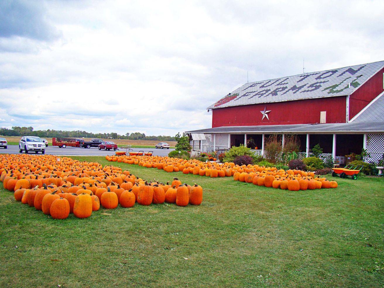 Pumpkins in Ohio