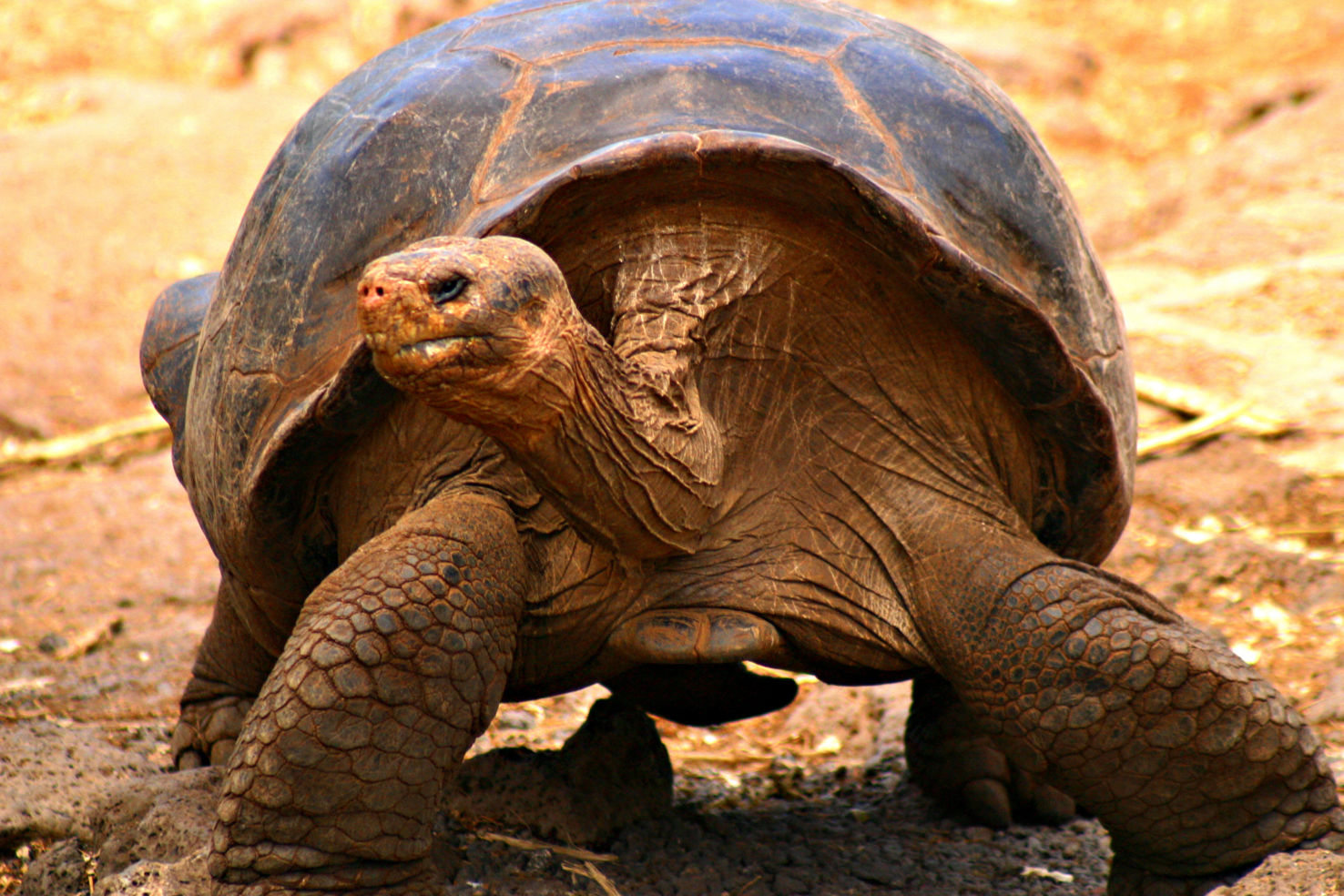 galapagos islands how to get there