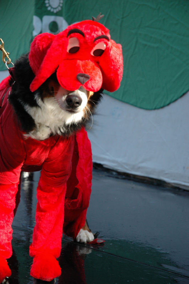 1 20 photos - Clifford The Big Red Dog Halloween Costume