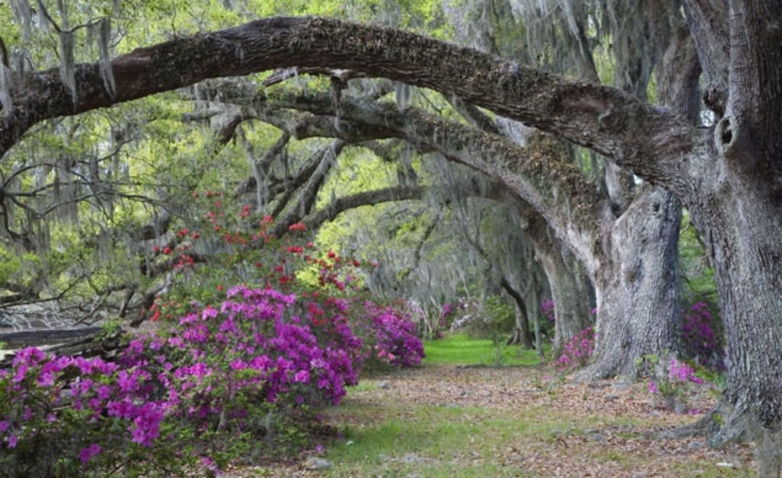 Photos america 39 s most beautiful home and garden tours budget travel for Jardines bonitos
