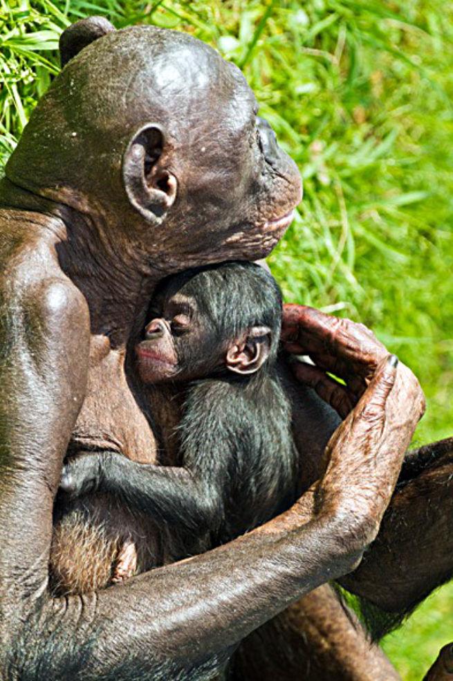 Photos: 36 Adorable Zoo Babies Born in 2011  Budget Travel
