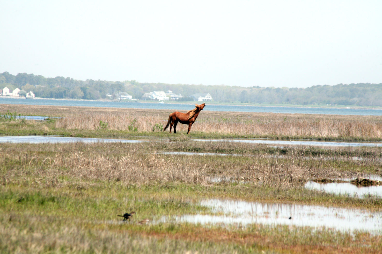 Assateague National Park, Maryland