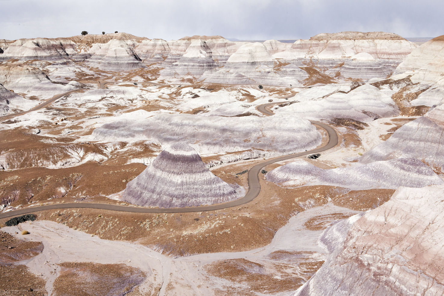 Navajo_Whitney-Tressel_Petrified-Forest_MG_4528