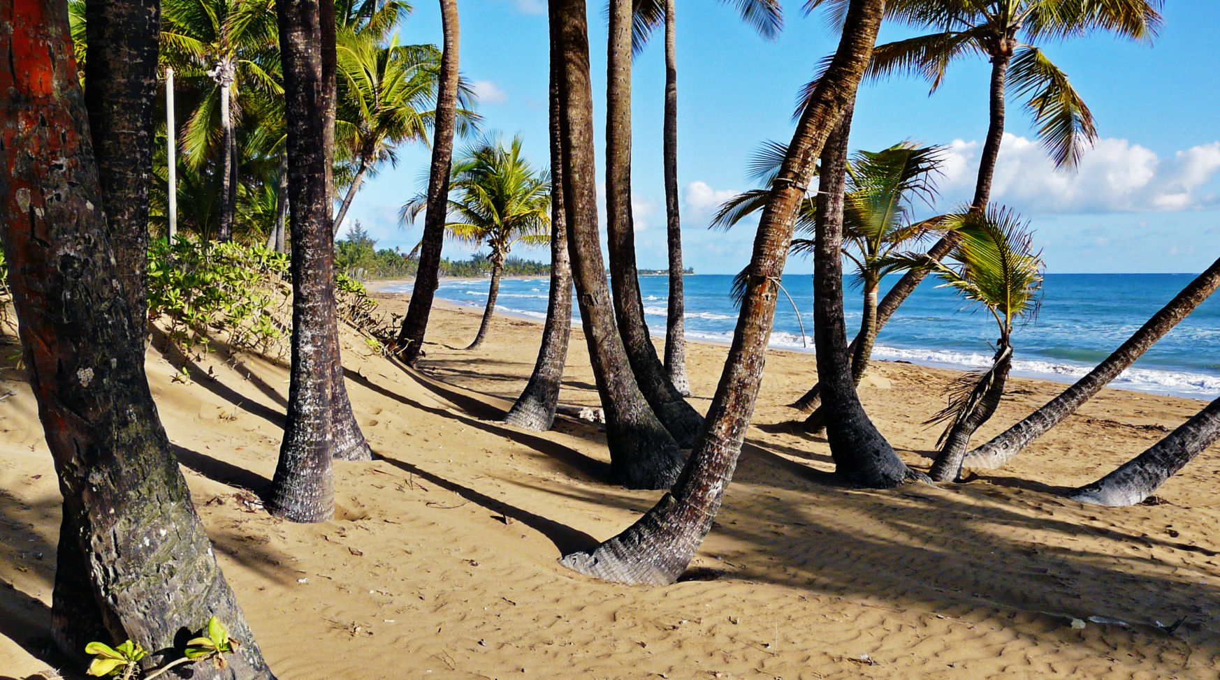 Palm trees on the beach in Puerto Rico