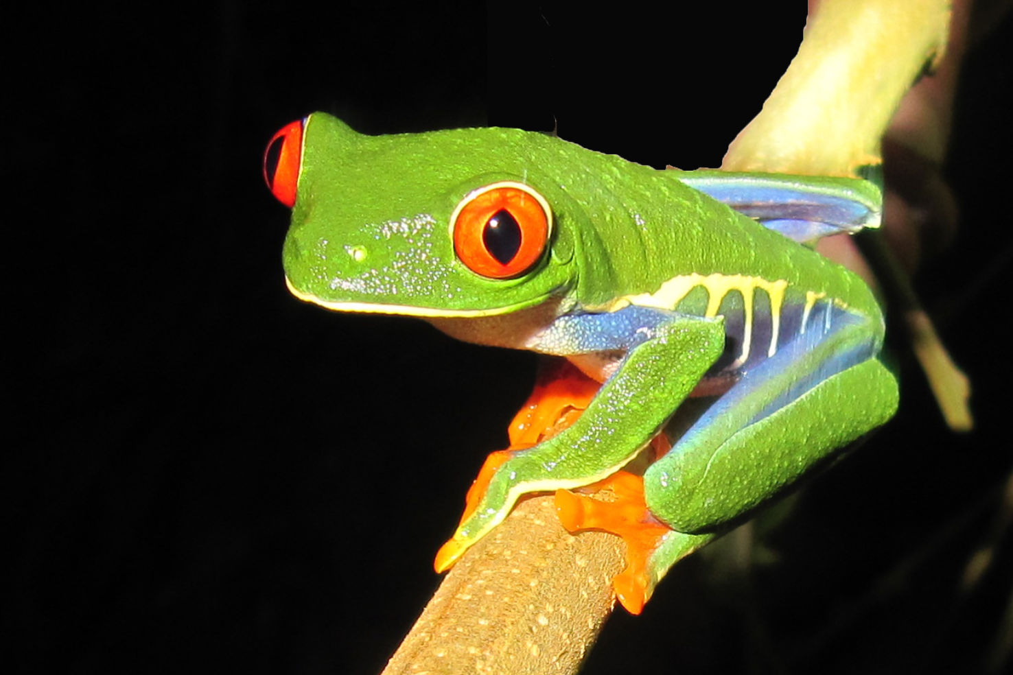 Easy Amp Affordable Costa Rica Budget Travel