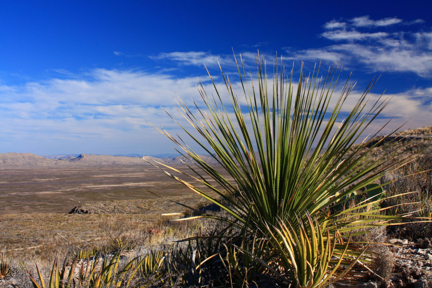 Road-Trip_Big-Bend_cactus