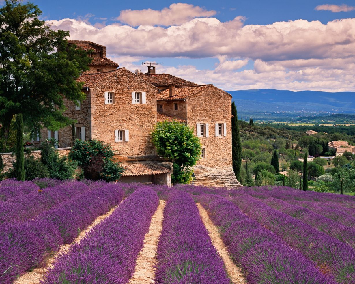 Lavender fields in Tuscany, Italy