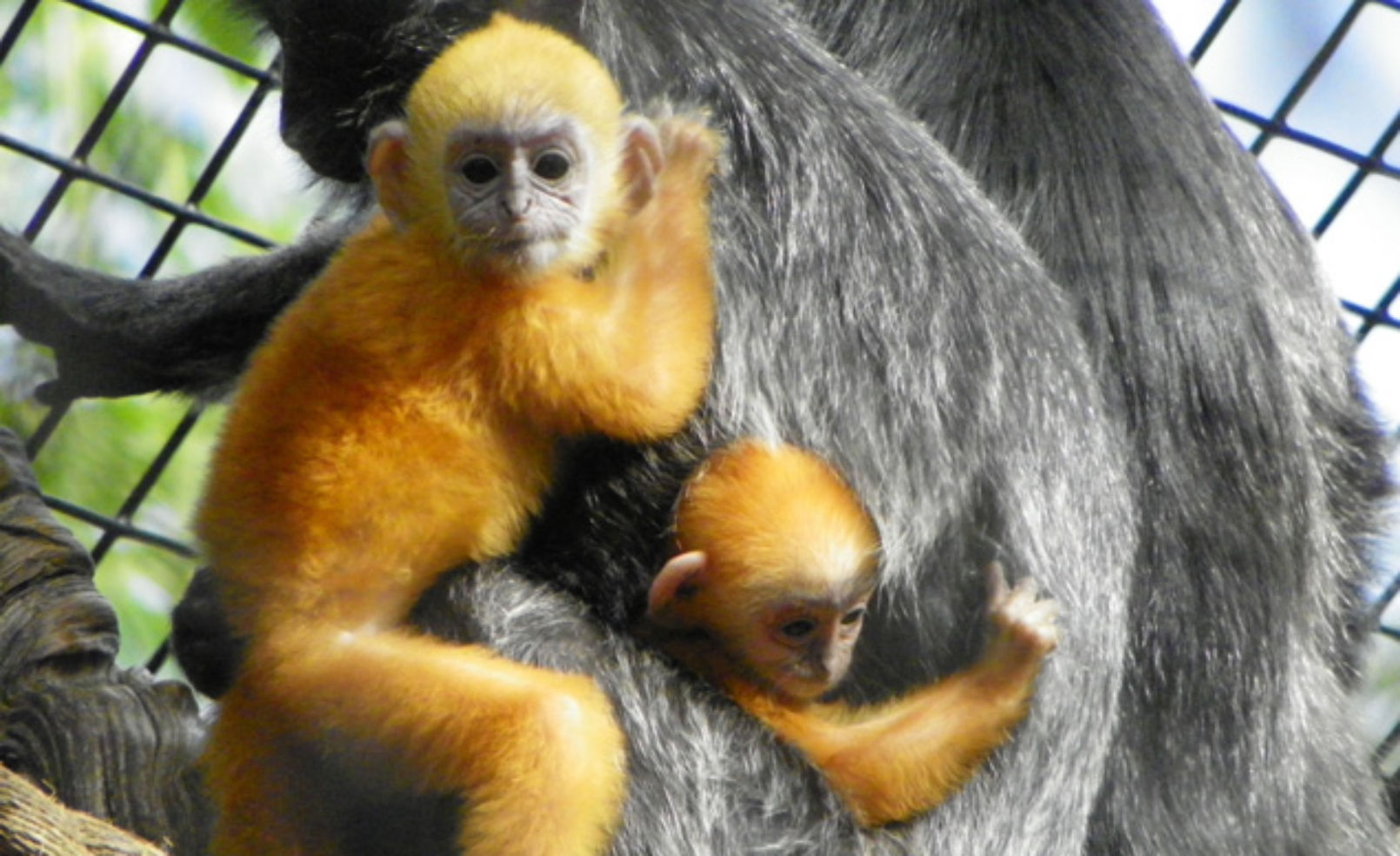 Adorable Zoo Animals You MUST See!