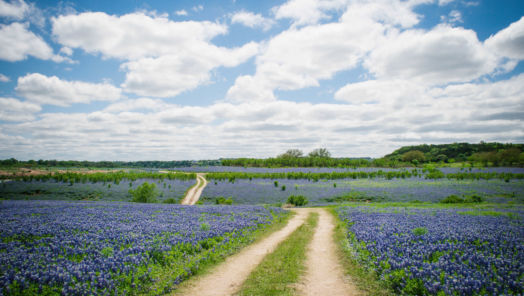 The Best Things to Do in Texas Hill Country tumbnail