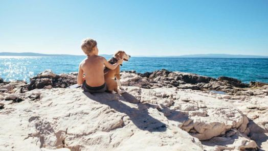Tips and Tricks for Traveling With Pets tumbnail