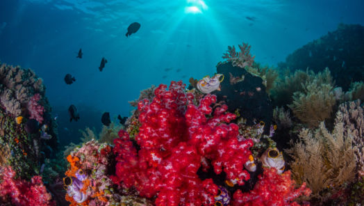 The 10 Most Beautiful Coral Reefs in the World tumbnail