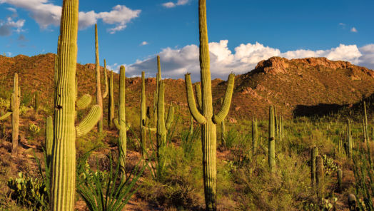 Why Tucson, Arizona, Is Your Next Great Outdoor Adventure tumbnail