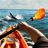 Kayaking with dolphins, Virginia Beach